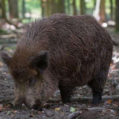 Ich glaub, mein Schwein pfeift!